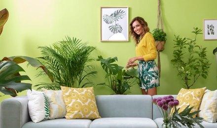 Grünes Zuhause: Zimmerpflanzen richtig pflegen