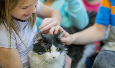 Lek Za Alergiju Na Mačke