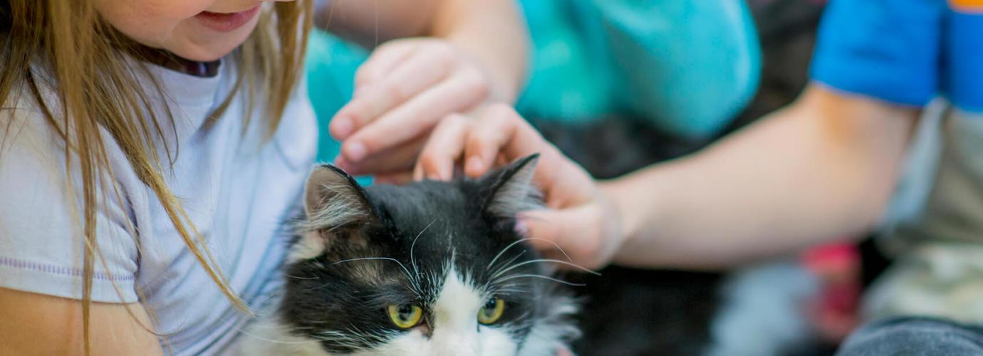 Алергія На Котів