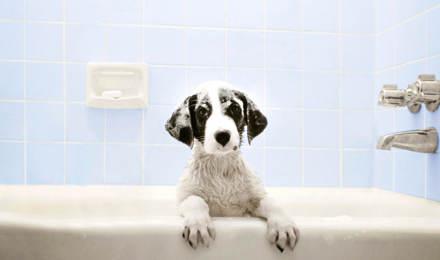 Wie Du Deinen Hund wäschst, von Kopf bis Pfote