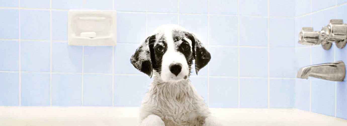 Câine în cada de baie așteptând ora de baie