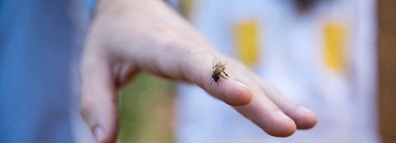 Prim-plan cu o viespe pe mâna unui bărbat