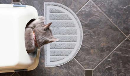 Ein Kätzchen sitzt in einem sauberen Katzenklo