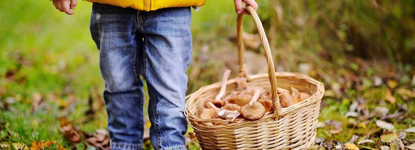 Gyermek szabadban gombászik egy fonott kosárral