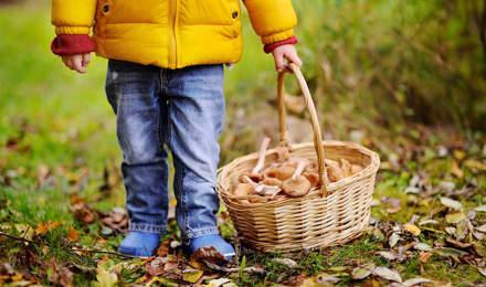 на открито за деца гъби с кошница ракита