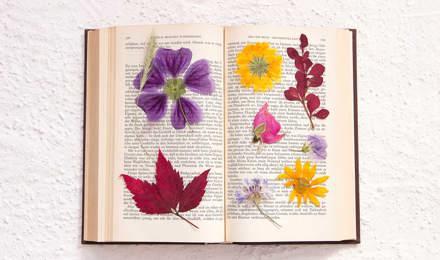 Gepresste Blumen in einem geöffneten Buch