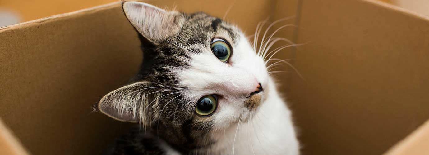 Eine Katze sitzt in einer Box aus Karton und blickt mit schrägem Kopf in die Kamera