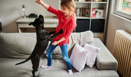 Ein kleiner Hund liegt auf rosafarbenen Kissen, im Hintergrund ein Mann und ein Baby