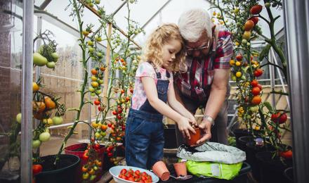 3 Methoden, um grüne Tomaten nachreifen zu lassen