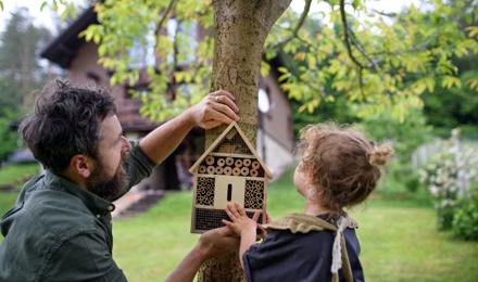 Як змайструвати готель для комах своїми руками