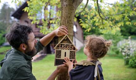 Anleitung zum Insektenhotel selber bauen
