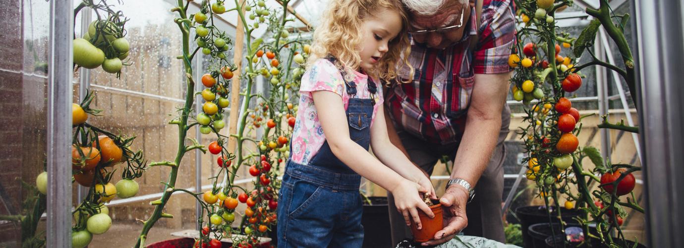 Tři způsoby, jak nechat dozrát rajčata